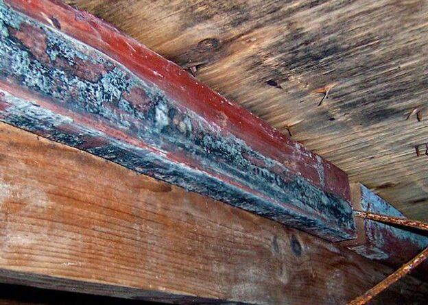 грибок в подвале деревянного дома