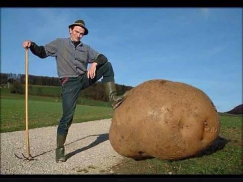 хранение картошки в подвале