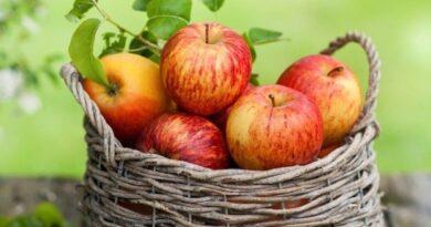 Хранение яблок в погребе