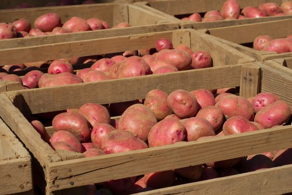 Способы хранения картофеля в ящиках