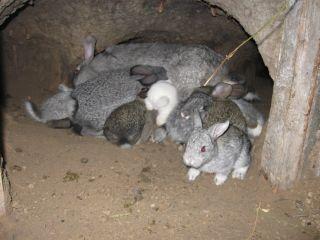 кролики в погребе
