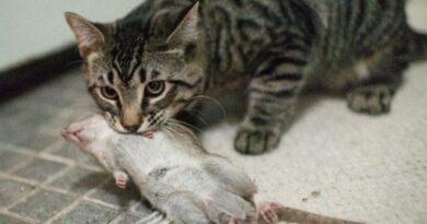 Как Избавиться От Мышей И Крыс В Погребе