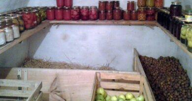 Устройство погреба для овощей