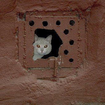 Домашняя кошка в подвале