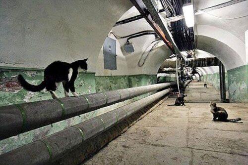 Как достать кота из подвала без особых проблем