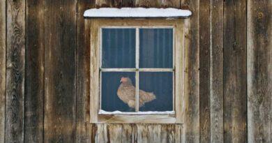 зимний курятник для 20 кур
